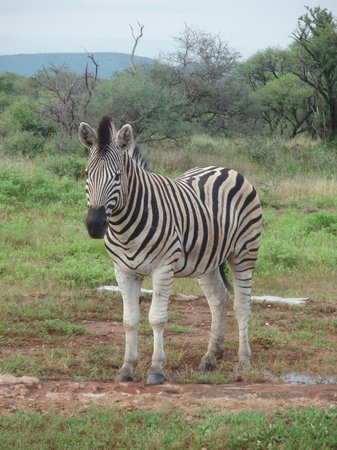 Madikwe Game Reserve, Sudáfrica: Aren't I photogenic?
