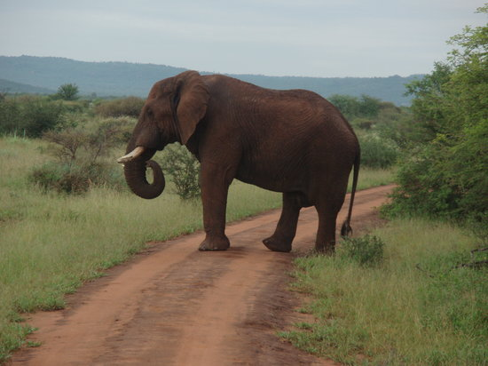 Madikwe Game Reserve, Afrika Selatan: I think we'd better stop