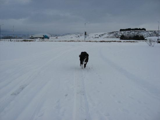 BEST WESTERN Sunridge Inn: Our dog enjoyed stretching his legs in the field behind the hotel.