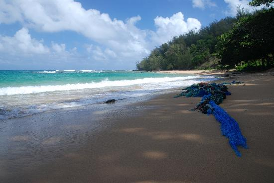 The Palmwood: Fishing nets washed up on beach at Moloa'a Bay