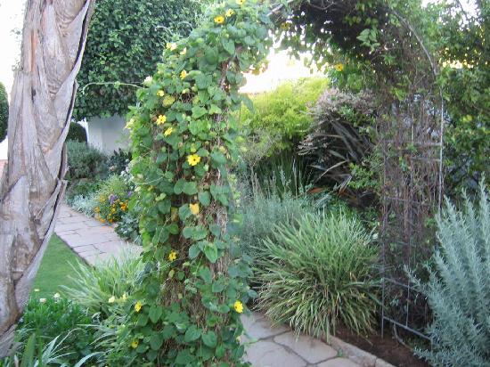 Carslogie House: gardens