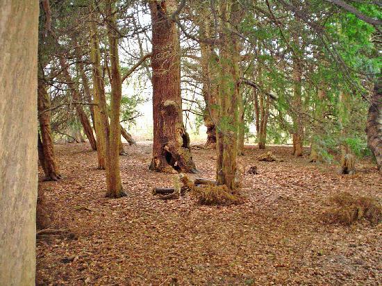 Sherwood Forest: Robin Hood estuvo aquí