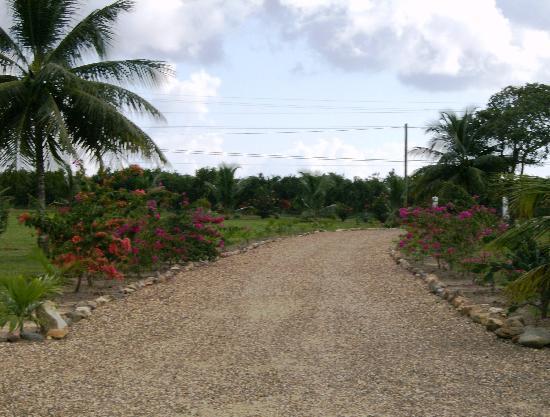 The Hummingbird Inn Belize : Driveway