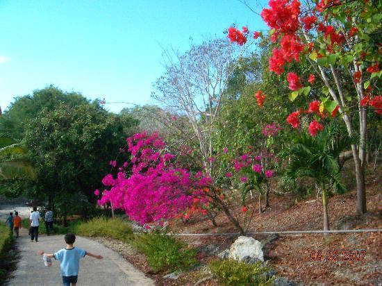 Newa Sumba Resort: Walkway at the hotel