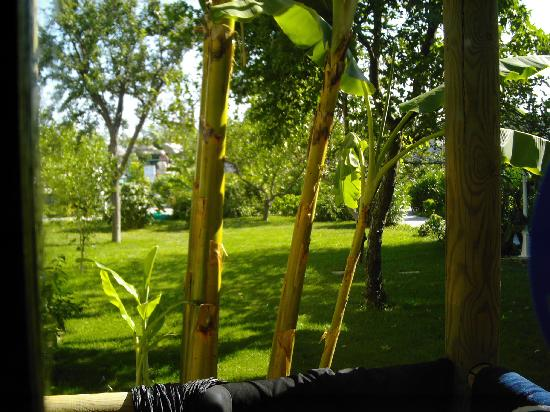 Hotel Parkim Palas: View o the garden trees from our room balcony.