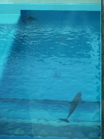 Delfines Hotel & Convention Center: The dolphins