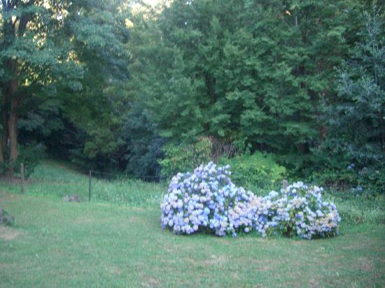 Olinda, Australia: Back Yard/Garden