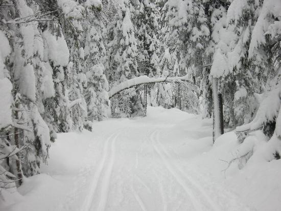 Nordmarka : Cross Country tracks groomed into the trail !