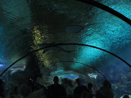 Henry Doorly Zoo: Inside the aquarium tunnel.