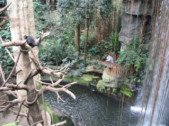 Outdoor Gorillas Picture Of Henry Doorly Zoo Omaha