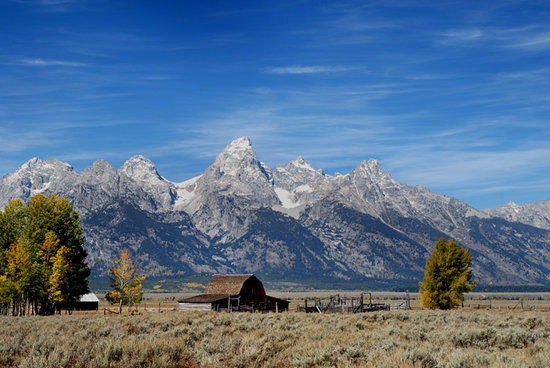 Parque Nacional Grand Teton, WY: Fall at Mormon Row