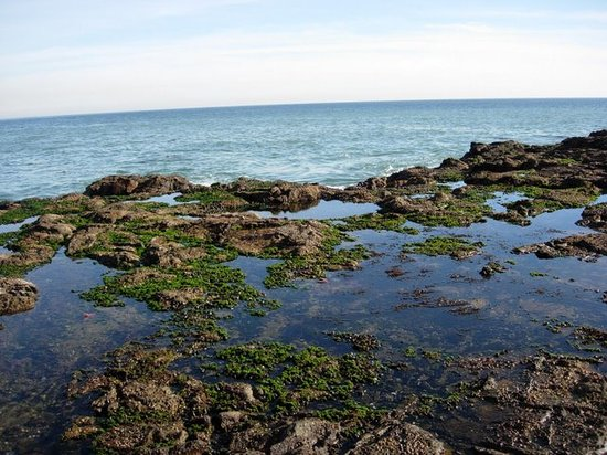 Rancho Palos Verdes, Californië: Mossy pools