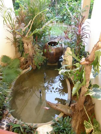 Our own koi pond