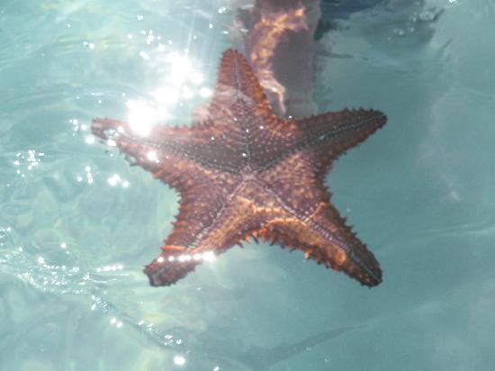 Memories Splash Punta Cana: étoile de mer