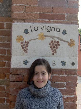 B&B La Vigna : la vigna