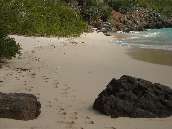 Guana Island : one of the white sand beaches