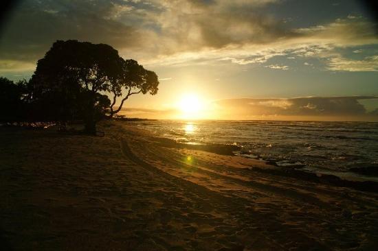 Four Seasons Resort Hualalai: Four Seasons Hualalai: The Beach Tree at sunset