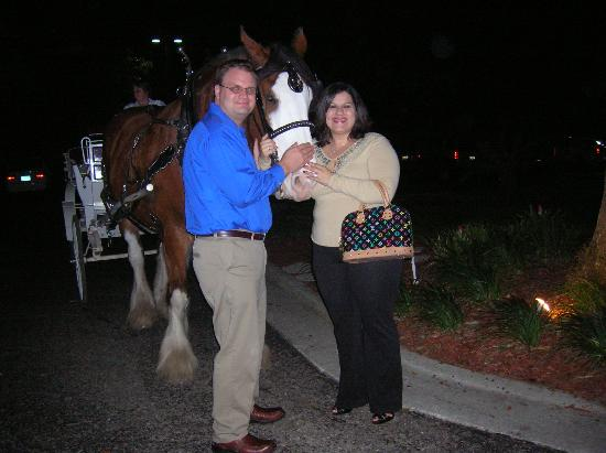 Hilton Ocala: My Husband and I with Buddy The Clydesdale