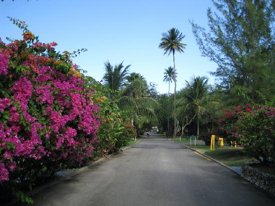Villa Montana Beach Resort: Road in resort complex