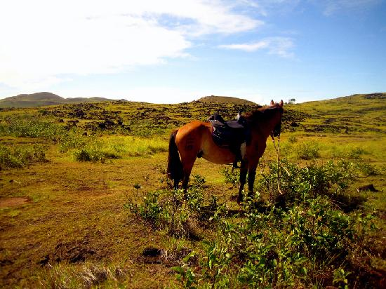 Tadeo & Lili Guest House: Horseback riding