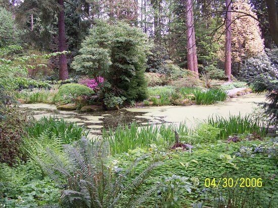 Superieur Rhododendron Species Botanical Garden: Woodland Pond In The Rhododendron  Species Garden