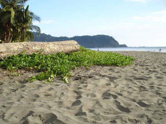 Jaco, Costa Rica : liriso, otra buena foto