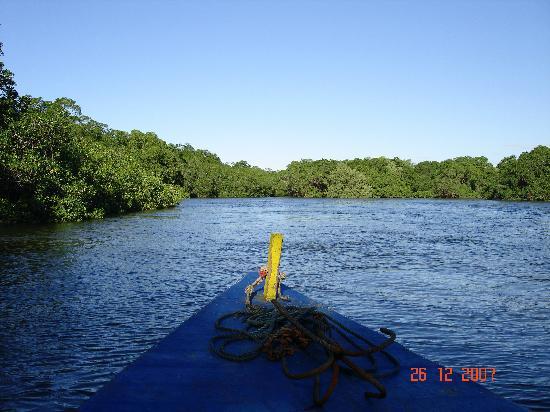 Hotel Bula Bula: Mangrove de l'estuaire de Playa Grande