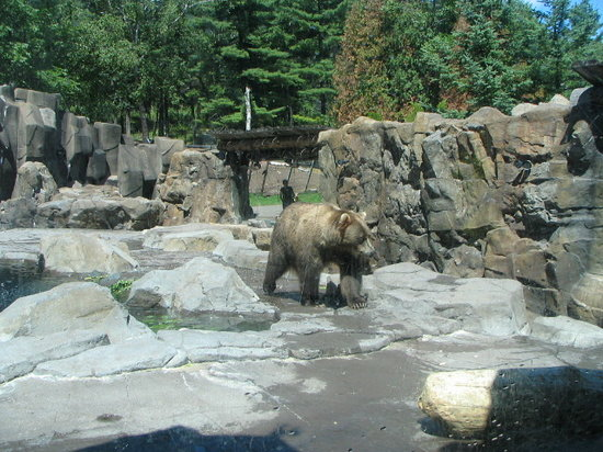 Lake Superior Zoo & Zoological Society: One of the bears up close and personal