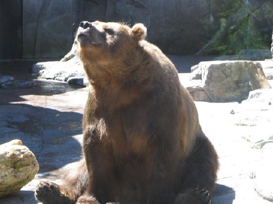 Lake Superior Zoo & Zoological Society: Brown Bear