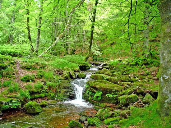Navarra, Espanha: la selva de Irati