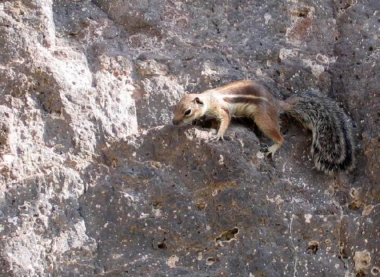 Scoiattolo a jandia foto di fuerteventura isole canarie tripadvisor - Jm puerto del rosario ...