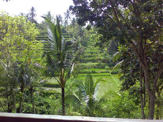 COMO Shambhala Estate: View from the residance to the rice fields