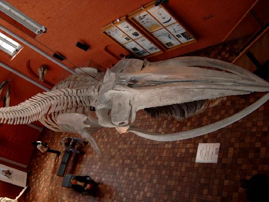 German Oceanographic Museum (Deutsches Meeresmuseum): Stralsund Oceanographic museum