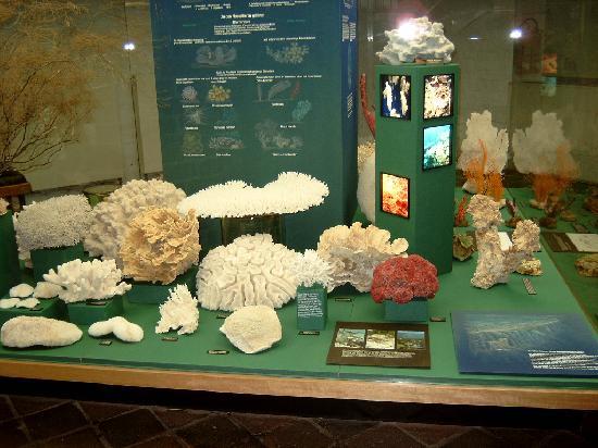 Deutsches Meeresmuseum: Stralsund Oceanographic museum