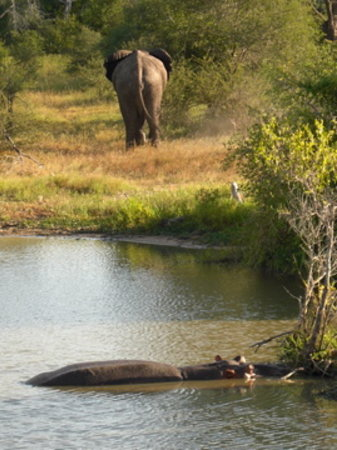 Sabi Sand Game Reserve, Afrique du Sud : Elephant and Hippo