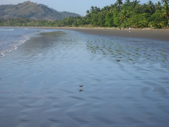 Tambor, Costa Rica: Beach at Bahia de los Delfines (3 blocks from our casita)