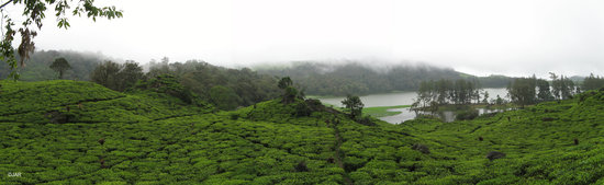 Бандунг, Индонезия: The lake of Situ Patengan & the tea plantations south of Bandung