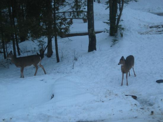 Pleasant Street Inn Bed & Breakfast: Even the deer love the hospitality!