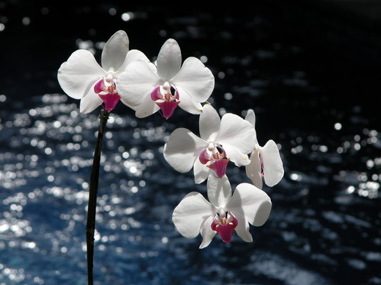 Sanur, Indonesien: It's the Best Climate for Orchids