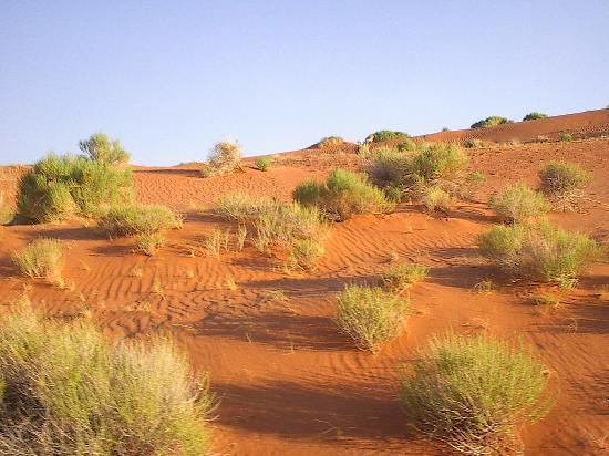 Firetree Bed & Breakfast : Desert Scenes of Monument Valley