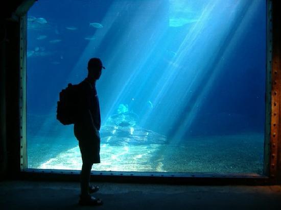 uShaka Marine World: Inside the aquarium