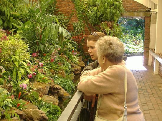 Durban Botanic Gardens: Inside the Orchid house
