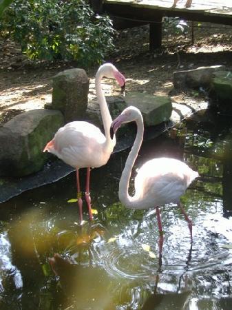 Crocworld Conservation Centre: Flamingos