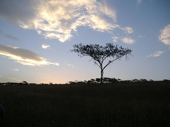 Pietermaritzburg, Güney Afrika: African sunset. There is nothing better!