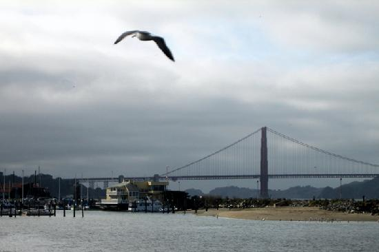 Marina Green: Seagull Flying in front of the Golden Gate Bridge