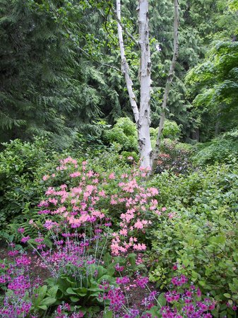 Bainbridge Island, Etat de Washington : Bloedel Reserve