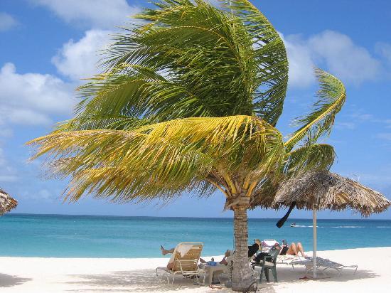 Bucuti & Tara Beach Resort Aruba: The exquisite beach at the hotel. 2 steps from our room!!
