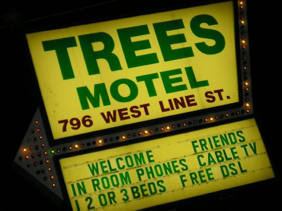 The Trees Motel : Everyone Welcome!