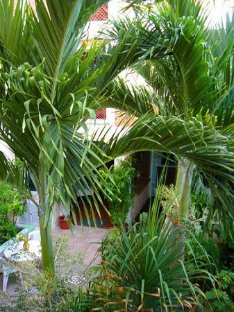 Francis Arlene Hotel: giardino interno