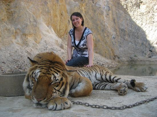 tiger canyon - Picture of Tiger Temple Thailand Tour ...